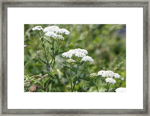 Queen Trio Framed Print