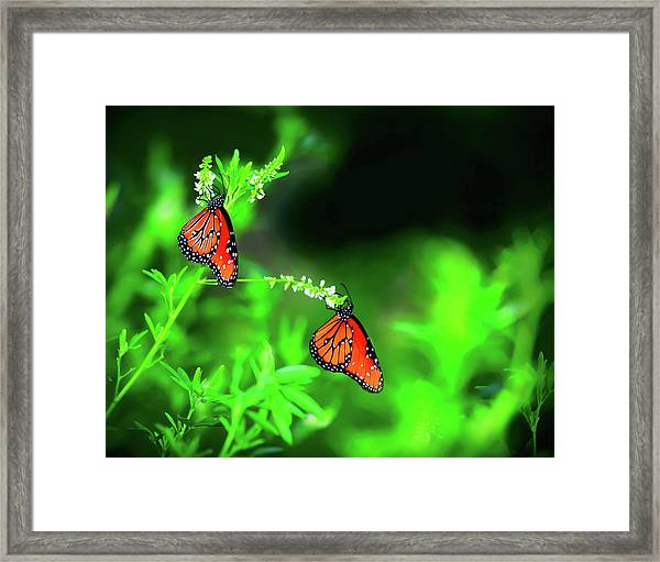 Framed Print featuring the photograph Queens by Scott Cordell