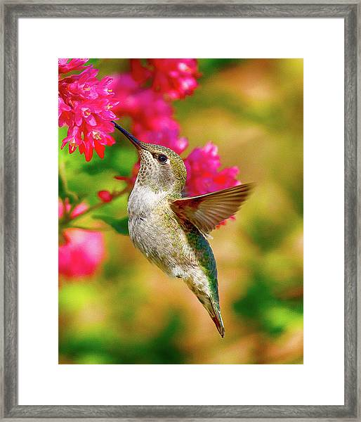 Quick Lunch Framed Print