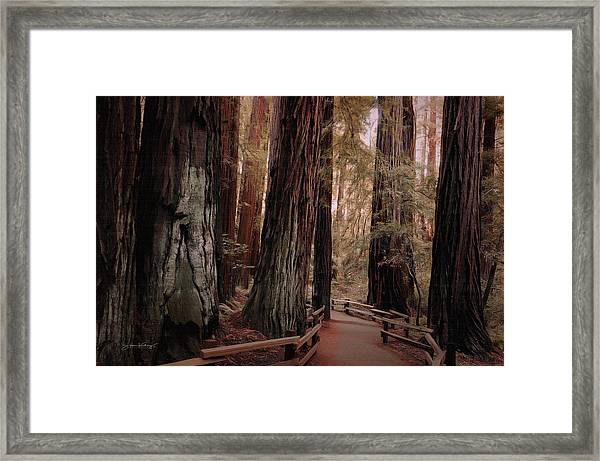Quiet Walk Framed Print