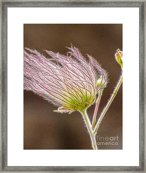 Quirky Red Squiggly Flower 1 Framed Print