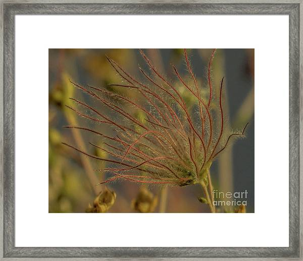 Quirky Red Squiggly Flower 4 Framed Print