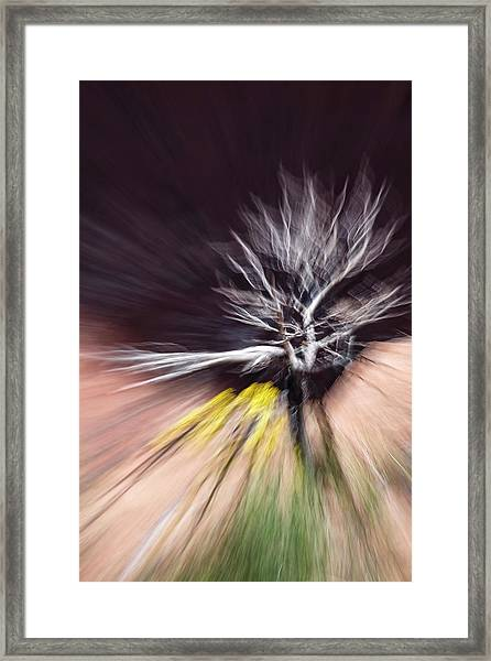 Rabbit Brush Bones Twist Framed Print