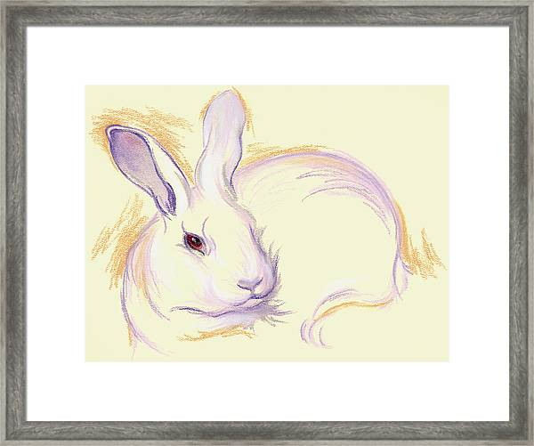 Rabbit With A Red Eye Framed Print