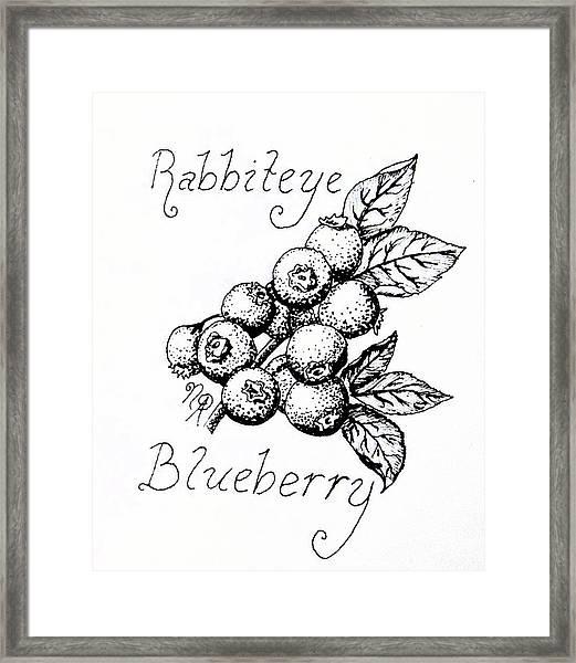 Rabbiteye Blueberry Framed Print