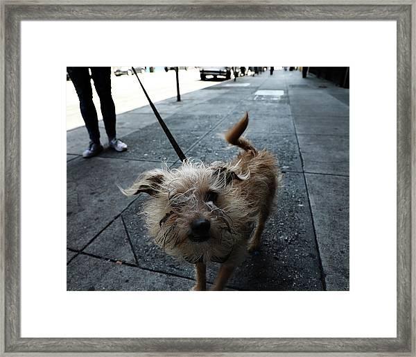 Rabid Dog Framed Print