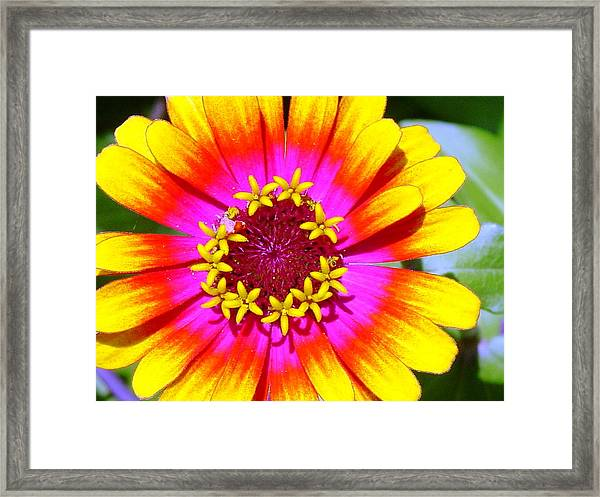 Radial Radiance Framed Print by Ward Smith