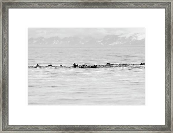 Raft Of Otters Framed Print