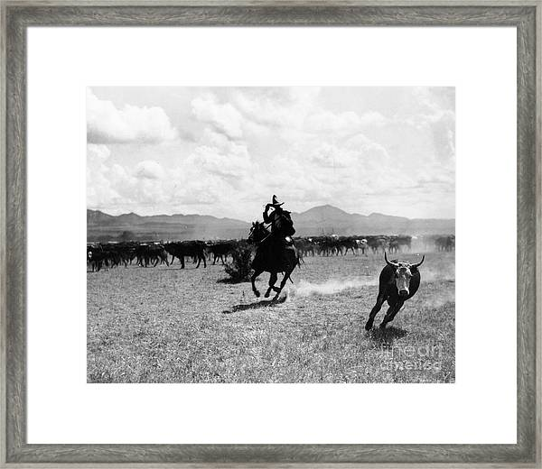 Raguero Cutting Out A Cow From The Herd Framed Print
