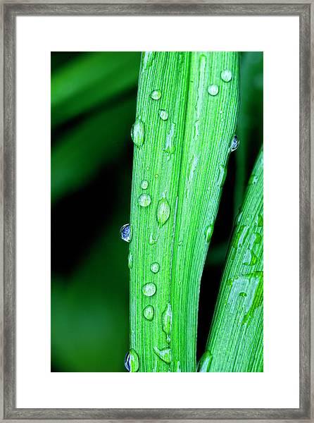 Rain Drops 26 Leaves Framed Print