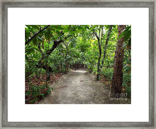 Framed Print featuring the photograph Rain Forest Road by Barbara Von Pagel