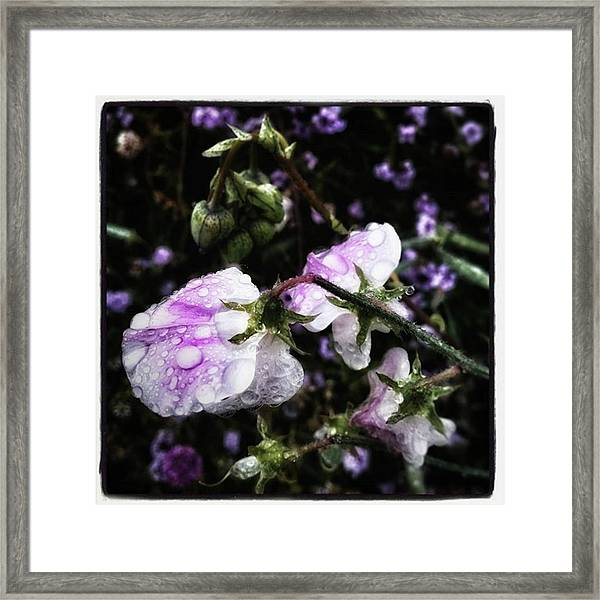 Framed Print featuring the photograph Rain Kissed Petals. This Flower Art by Mr Photojimsf