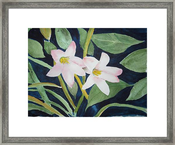 Rain Lilly Framed Print