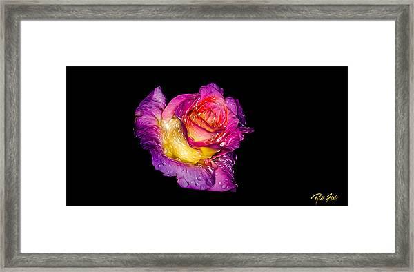 Rain-melted Rose Framed Print