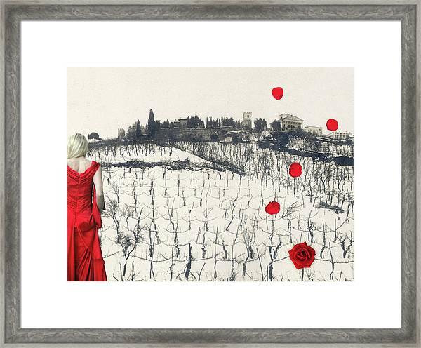 Rain Red Roses Framed Print