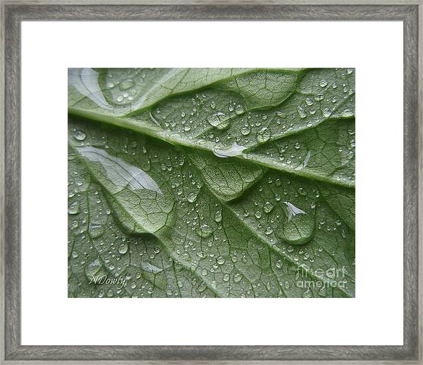 Rain Splashed Snow On The Mountain Framed Print