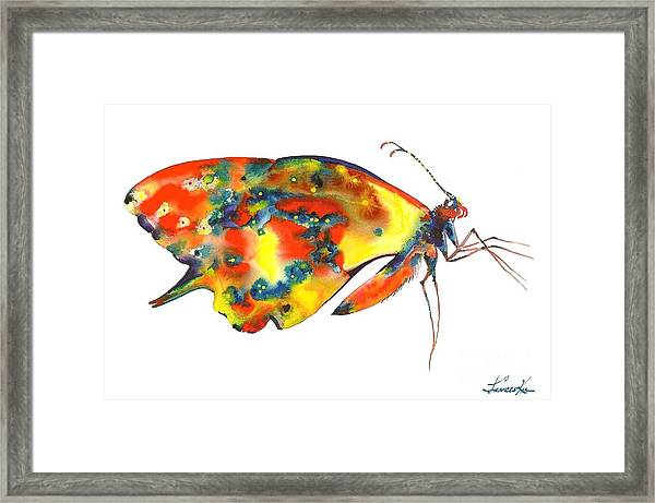 Rainbow Butterfly Framed Print