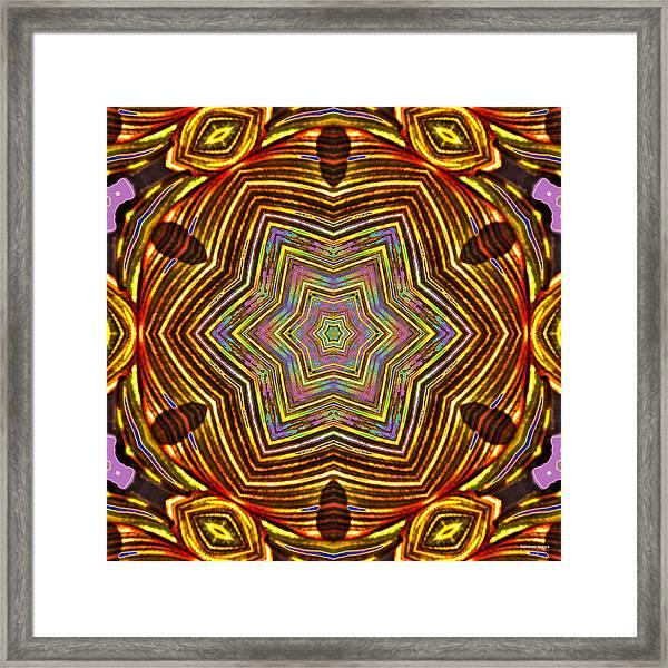 Rainbow Canna Framed Print