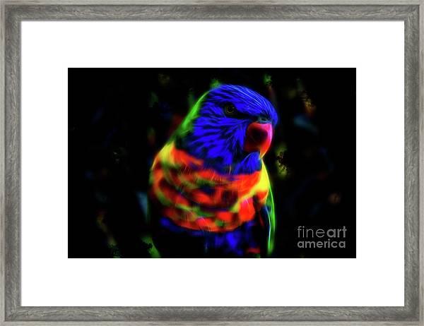 Rainbow Lorikeet - Fractal Framed Print