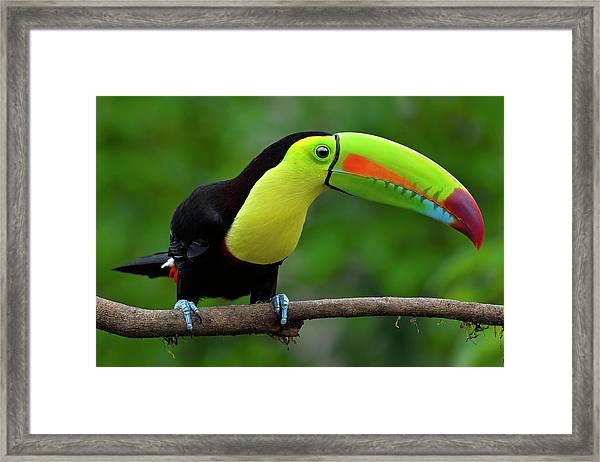 Rainbow Party Framed Print