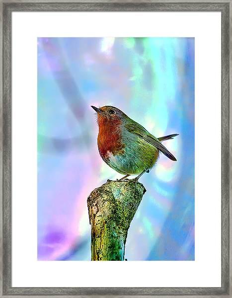 Rainbow Robin Framed Print