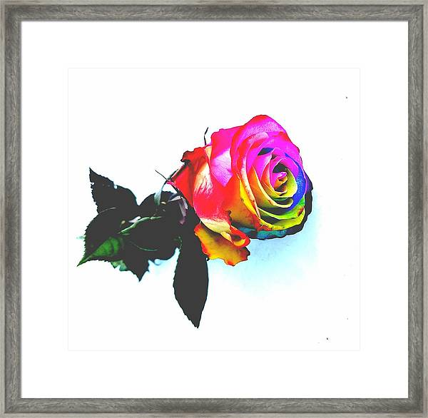 Rainbow Rose 2 Framed Print