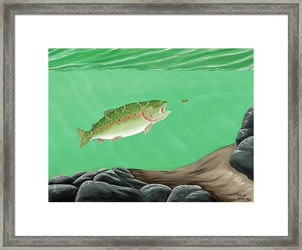 Rainbow Trout - Enticed From The Pool Framed Print by Ralph Martens