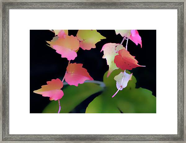 Rainbow Vine Leaves Framed Print