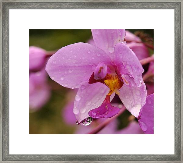 Raindrop Reflections Framed Print