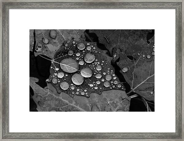 Raindrops On Leaves Framed Print