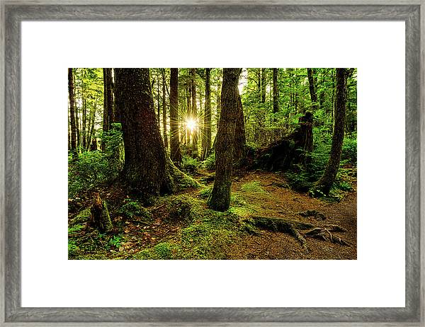 Rainforest Path Framed Print