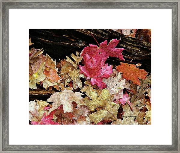 Rainy Day Leaves Framed Print