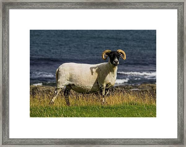 Ram With Attitude Framed Print