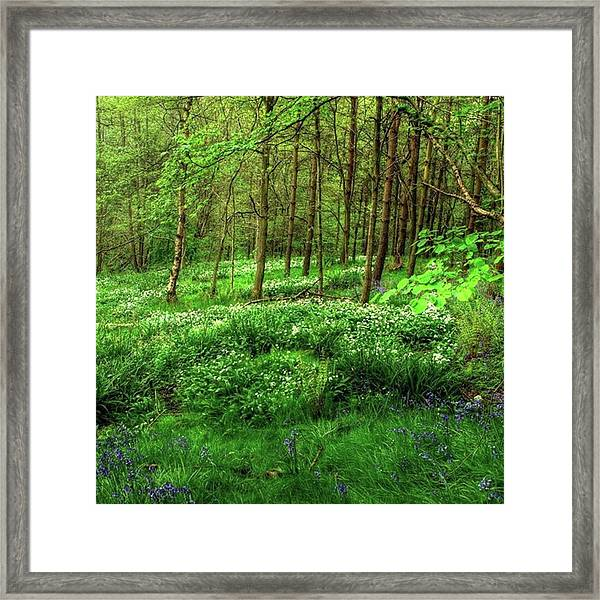 Ramsons And Bluebells, Bentley Woods Framed Print