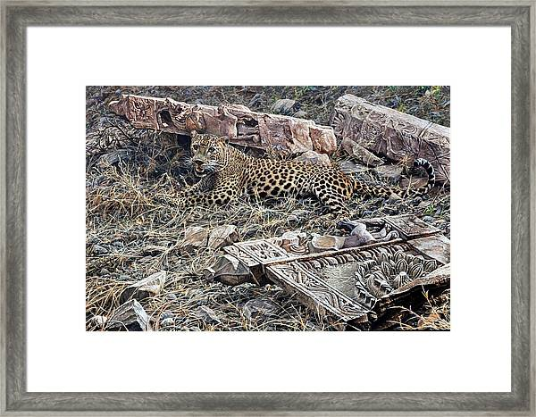 Ranthambore Apparition Framed Print