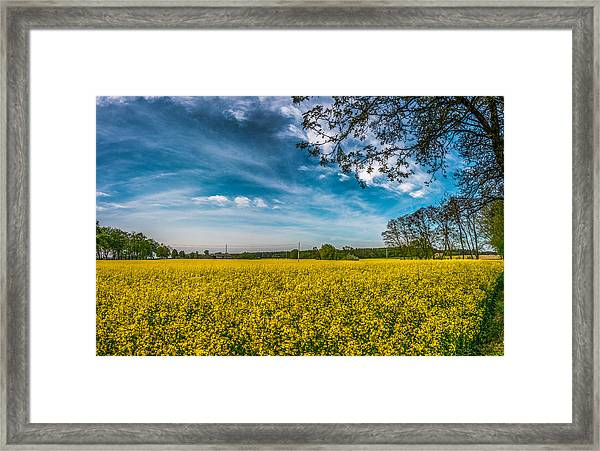 Rapeseed Field Framed Print