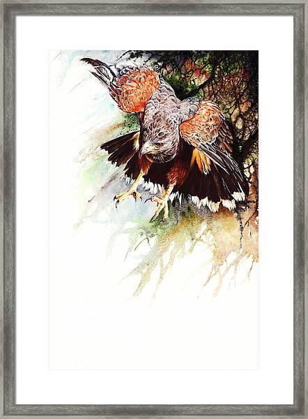 Raptor Framed Print