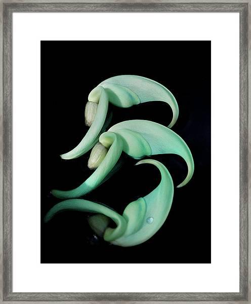Rare Orchid Petals Framed Print