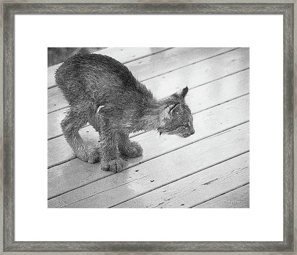 Crouching Kitty Framed Print