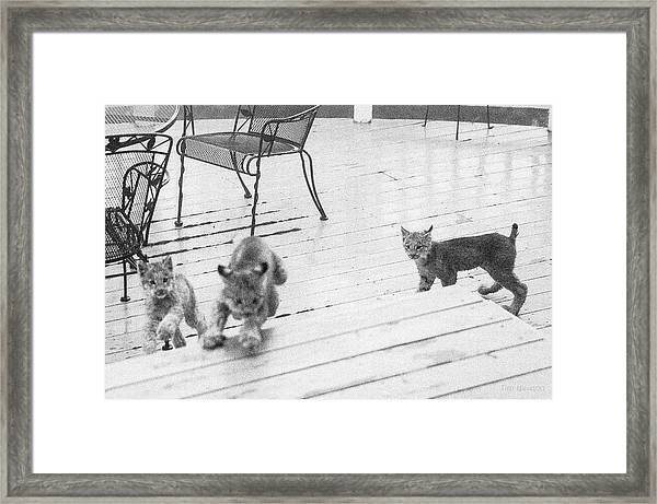 Relay Chase Framed Print