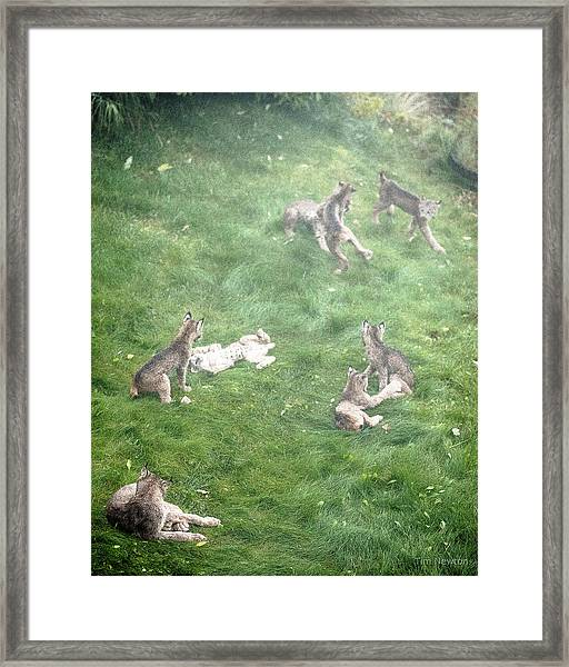 Play Together Prey Together Framed Print