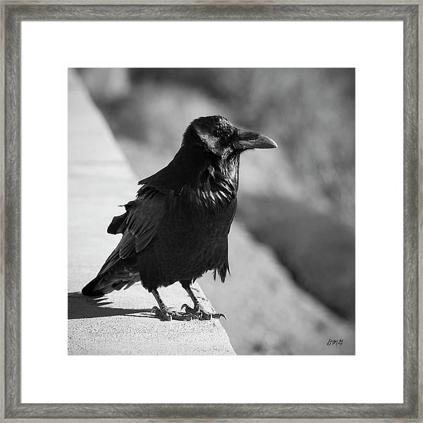 Raven Iv Bw Framed Print