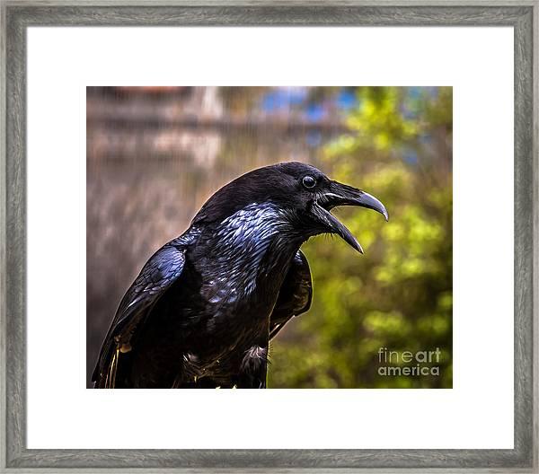 Raven Profile Framed Print