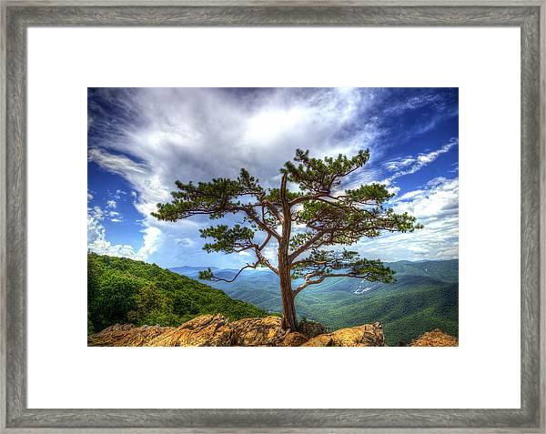 Ravens Roost Tree Framed Print