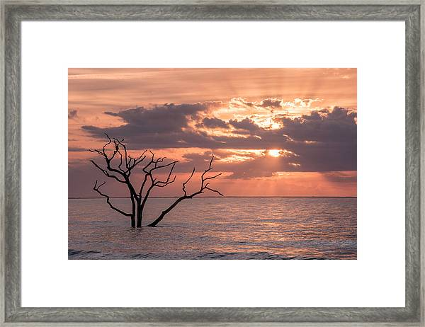 Behold Framed Print by Michael Donahue