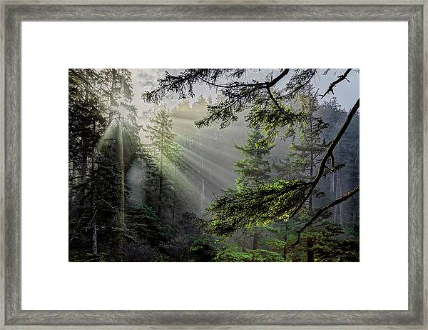 Morning Rays Through An Oregon Rain Forest Framed Print