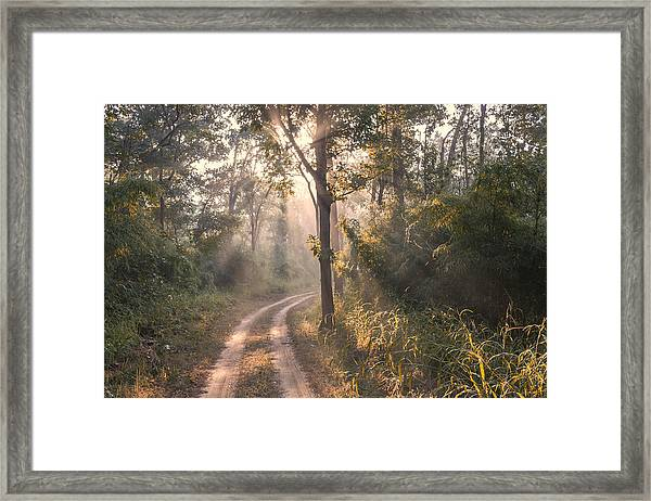 Rays Through Jungle Framed Print