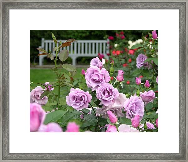 r.'Blueberry Hill' 6426 Framed Print