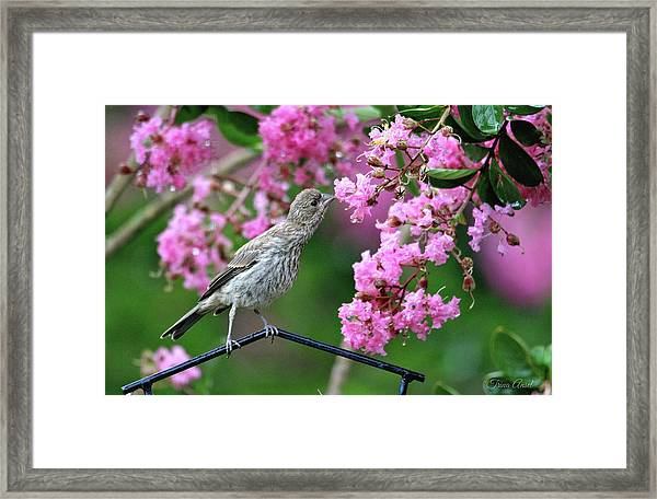 Reach For It Framed Print