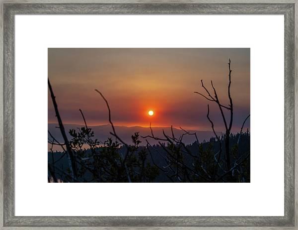 Reaching For The Sun Framed Print